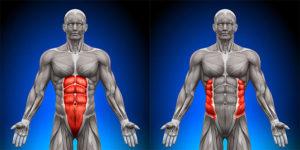 1.お腹周りの3種類の筋肉を鍛えるため