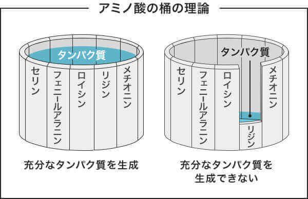 アミノ酸 桶の理論