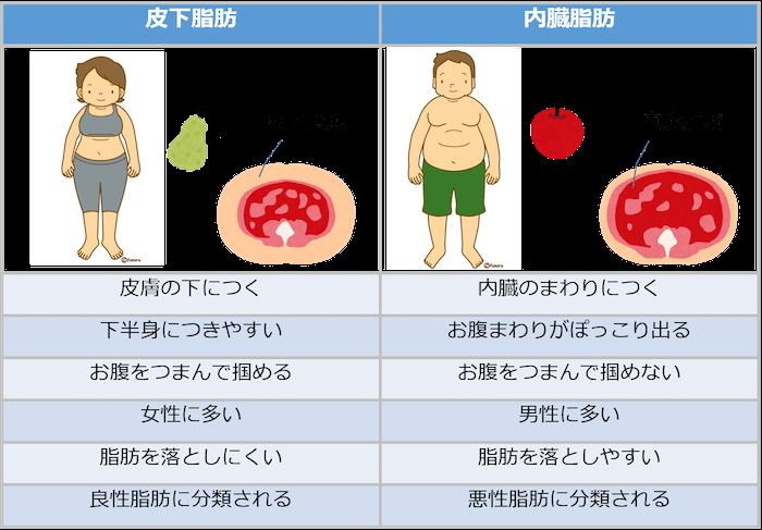 お腹周りにつく脂肪の種類とは
