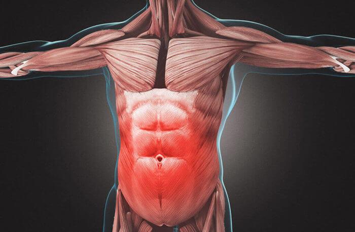 腹筋の構造を理解して、腹筋トレーニングの効果アップ!