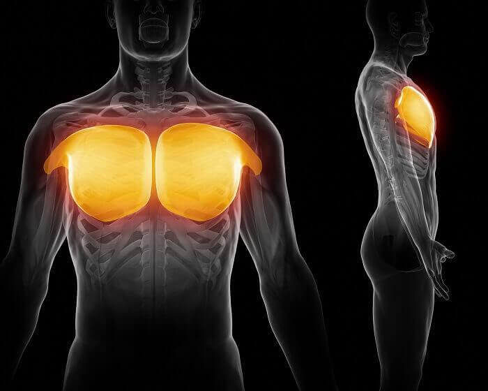 大胸筋の自重トレ前に知っておこう!大胸筋の4つの筋肉の特徴