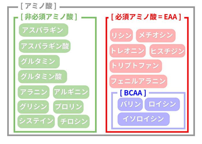 アミノ酸の関係図 bcaa eaa 必須アミノ酸