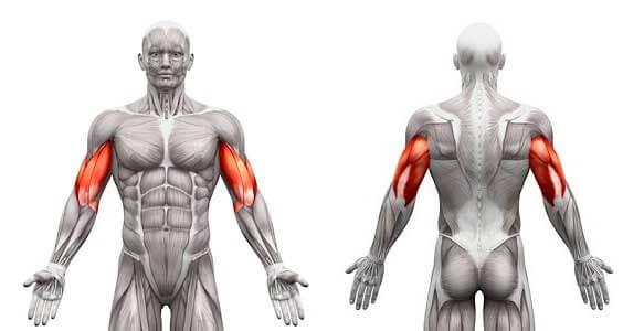 拮抗筋(きっこうきん)をバランスよく鍛える