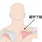 Q:肩甲骨がゴリゴリなる原因って?
