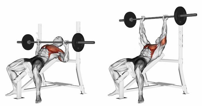 インクラインベンチプレスで鍛えられる筋肉