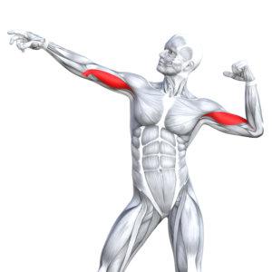 効果を高めるポイントや怪我をしない注意点も解説 デッドリフトの正しいやり方。メリットだらけの素晴らしいトレーニングで全身を鍛えよう