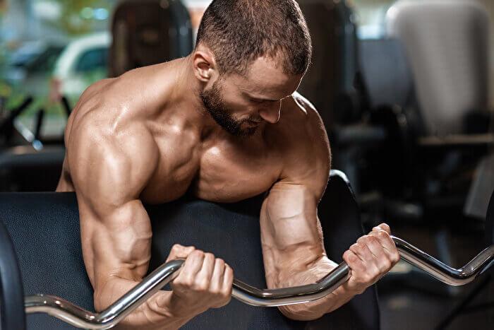 プリチャーカールで鍛えることができる筋肉