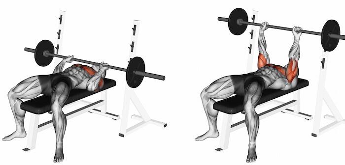 ナローベンチプレスで鍛えられる筋肉